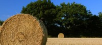 contadino5