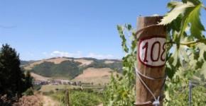 wine tour 3 giorni